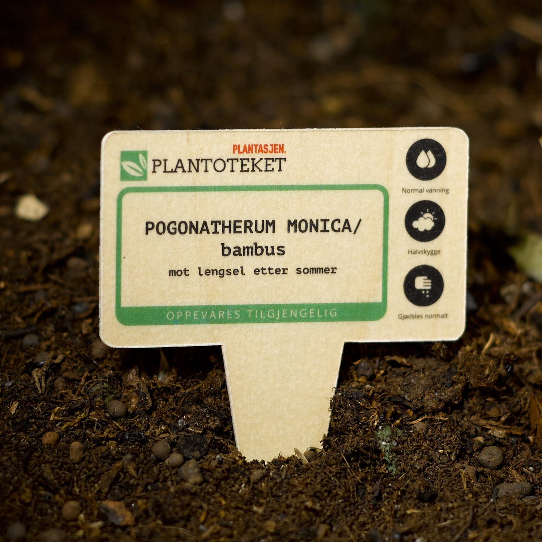 blomepinne plantasjen
